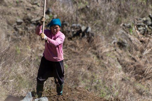 Feldarbeit, Xinjie, China