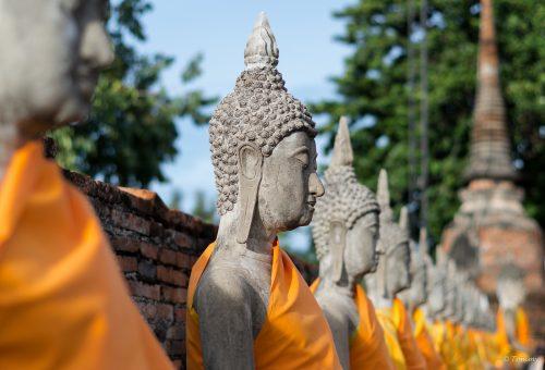 Buddha Köpfe, Ayutthaya, Thailand