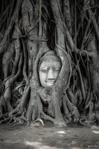 Roots of Buddhism, Buddhakopf im Baum, Ayutthaya, Thailand