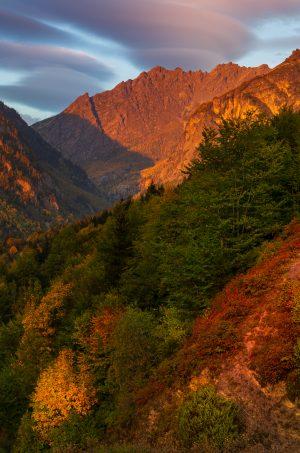 georgian-autumn